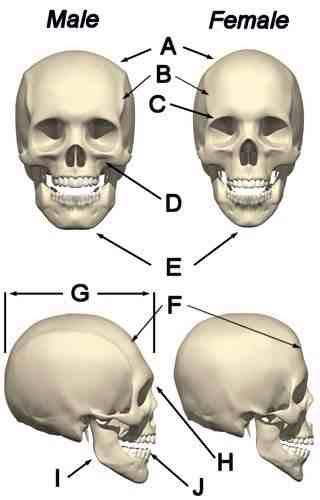 Skull Theory